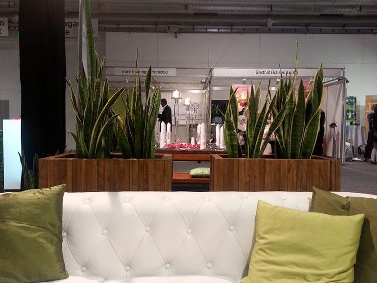 pflanzen mieten rent-a-lounge 2