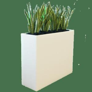 pflanzen - Raumteiler cool mit Sansevieria mieten rent-a-lounge