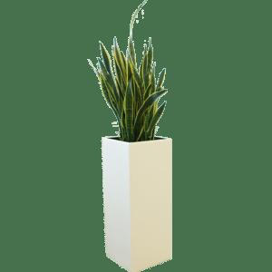 pflanzen - Stehkube Cool mit Sansevieria mieten rent-a-lounge
