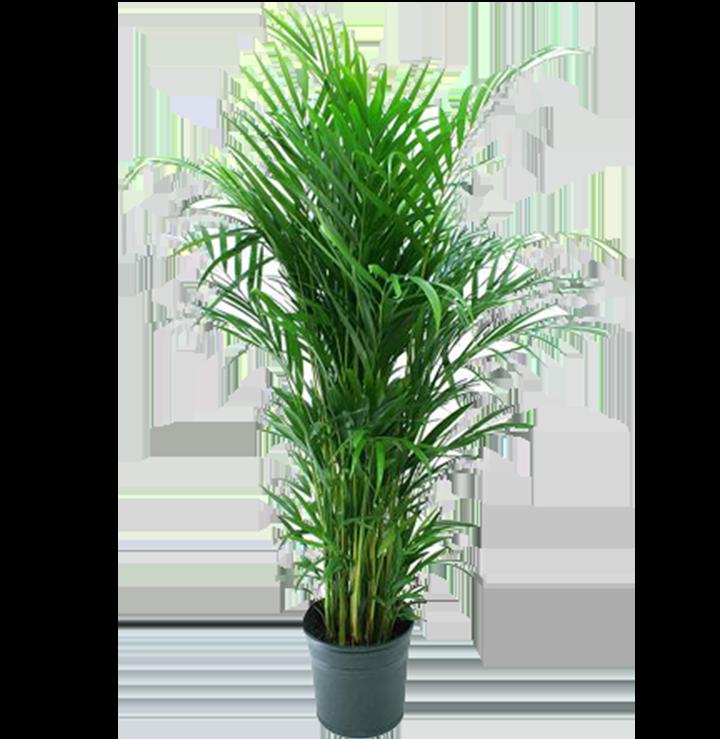 pflanzen mieten rent-a-lounge
