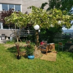 deko bäume mieten rent-a-lounge 13