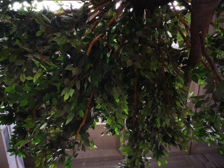 deko bäume mieten rent-a-lounge 8
