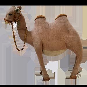 kamel mieten rent-a-lounge ag
